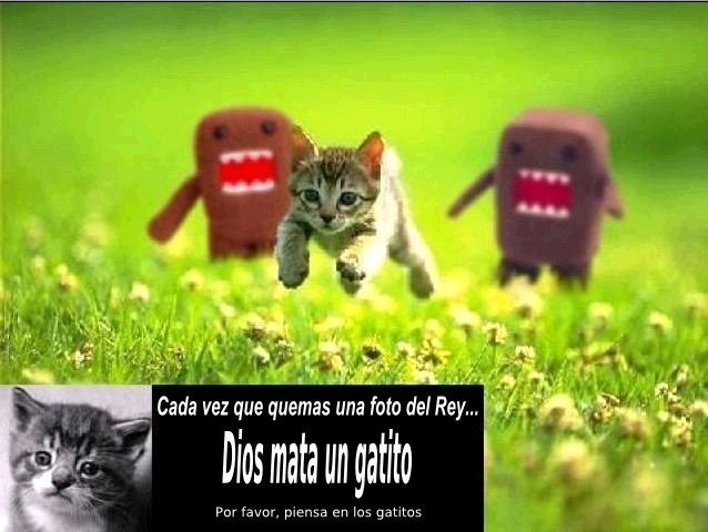 Gatos Republicanos
